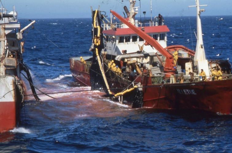 بين المغرب والاتحاد الأوروبي توجد اتفاقية صيد بحري بمقتضاها يصطاد الأوروبيون من المياه الإقليمية المغربية