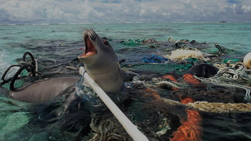 فخار أكثر بلاستيك أقل
