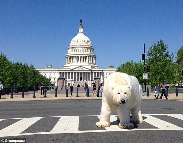 دب قطبي غير حقيقي في بنسلفانيا بأمريكا
