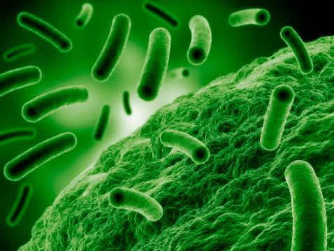 بكتيريا البكتيريا