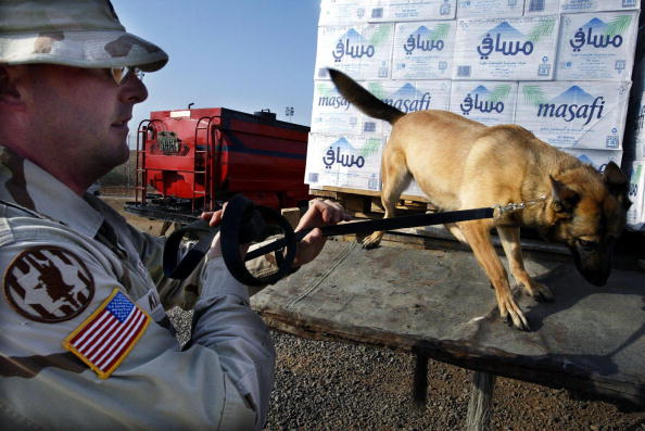 """A US Marine sniffer dog searchs 17 September 2003 for explosive outside the US base in Djibouti """"Camp le Mounnier"""", where circa 1500 US servicemen are on duty.  AFP PHOTO/MARCO LONGARI  (Photo credit should read MARCO LONGARI/AFP/Getty Images)"""