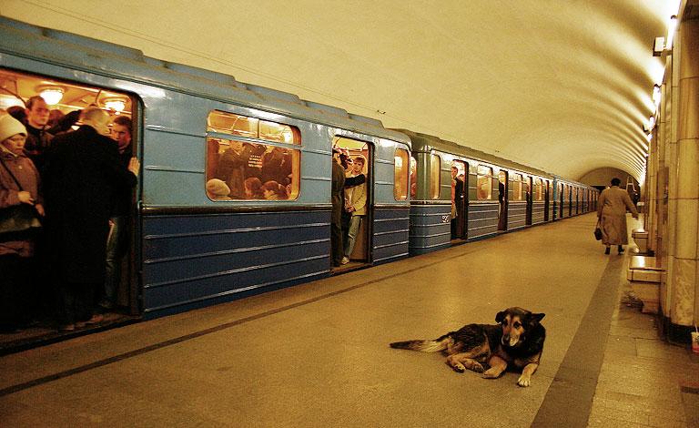 كلب ينتظر قطار المترو في موسكو