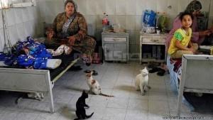 الرعاية الصحية في مصر: ملاءات متسخة وقطط ضالة