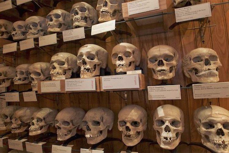 متحف الإنسان.. حيث تتباهى فرنسا بعرض جماجم ثوار مستعمراتها السابقة - ساسة  بوست