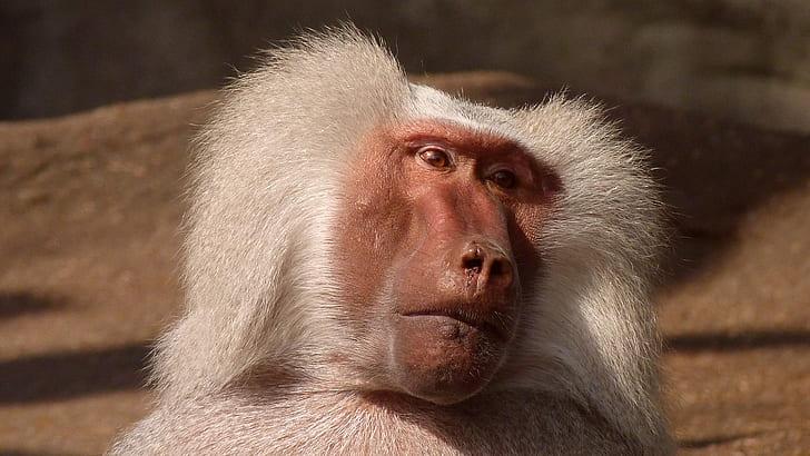كيف سيطرت عصابات القرود على شوارع تايلاند؟