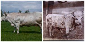 الحيوانات قبل وبعد التدجين