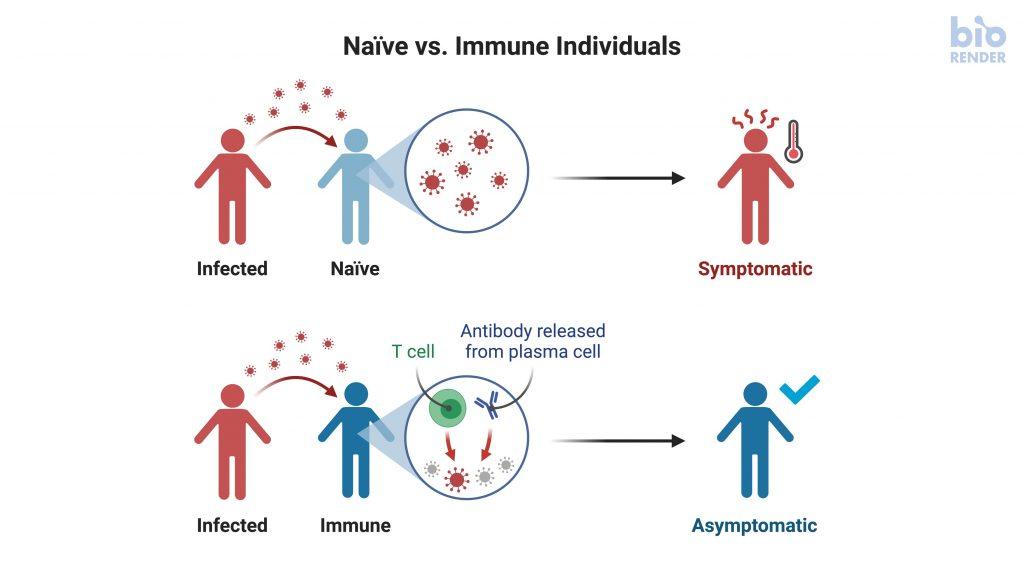 كيف سيتعامل الجهاز المناعي مع عودة الإصابة بفيروس كورونا ؟