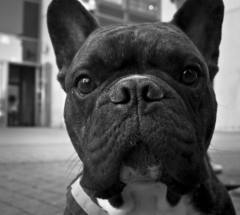 dog-862961_960_720