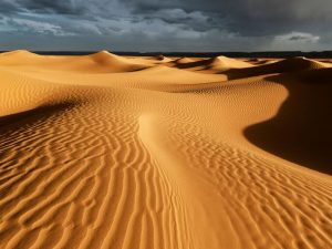 الصحراء الجزائرية ، مصدر الصورة ( plante)