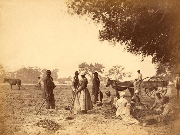 7 أسئلة تشرح لك تاريخ تجارة العبيد في أمريكا