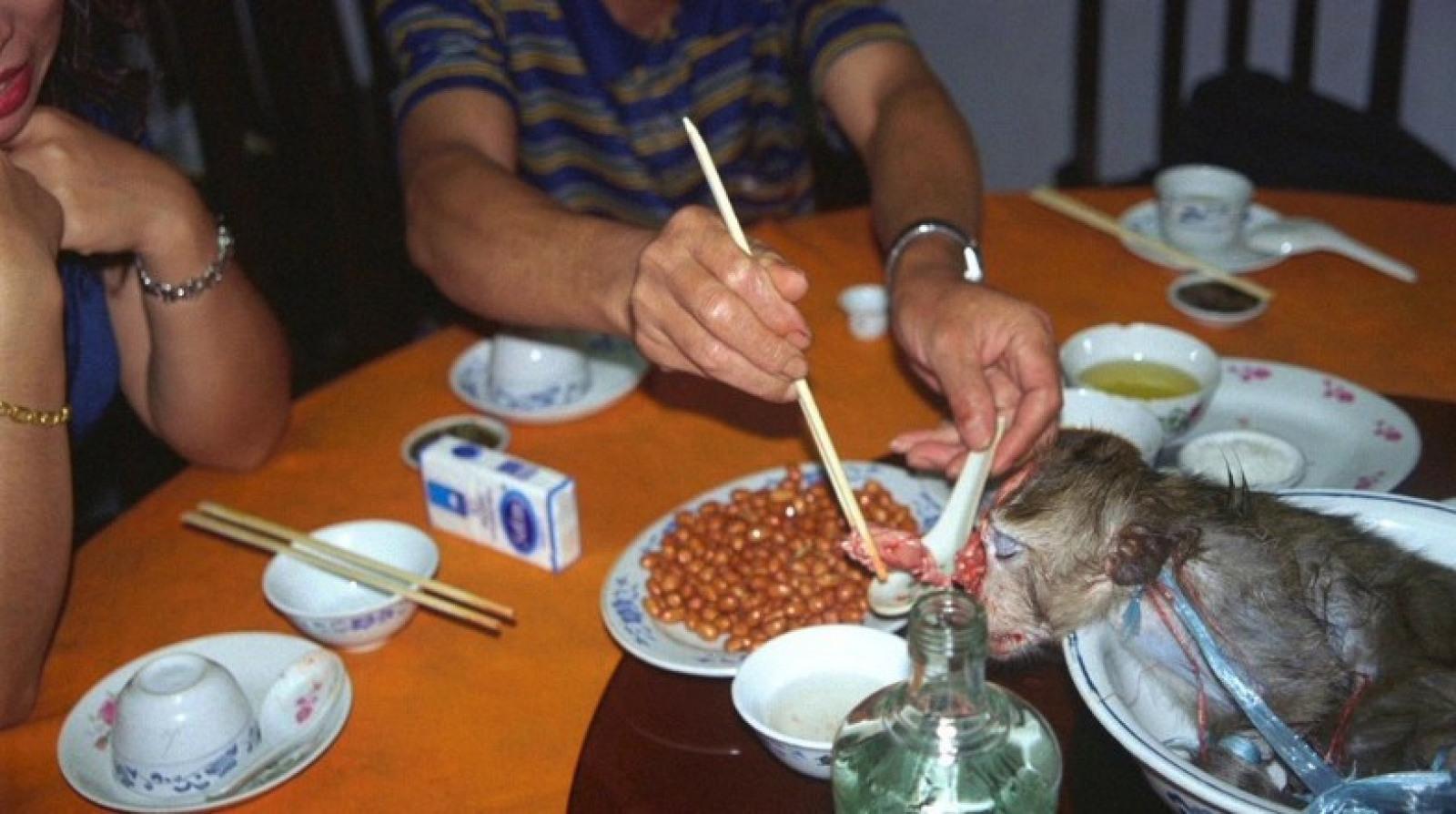 5 وجبات «سادية» آسيوية.. إنهم يأكلون الحيوانات حيّة في الصين! - ساسة بوست
