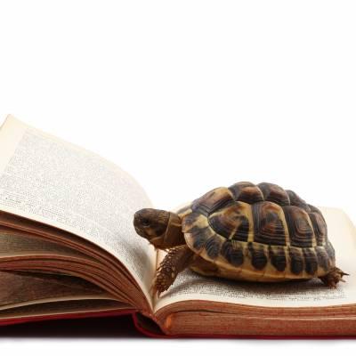 نوادي القراءة البطيئة
