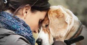 العلاج النفسي باستخدام الحيوانات