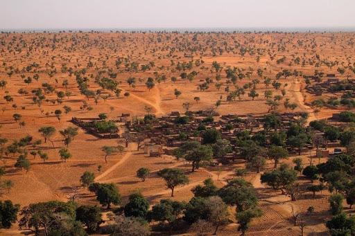 : كيف كشف الذكاء الاصطناعي عن وجود ملايين الأشجار في الصحراء الكبرى؟